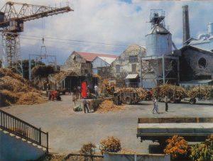 St Philip Barbados sugar factory 1950s