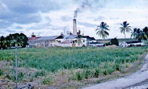 Three Houses Sugar Factory, St. Philip, Barbados