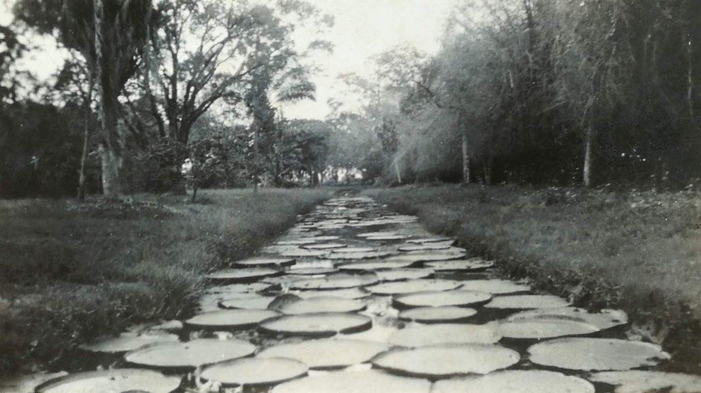 Botanical Gardens, Georgetown, British Guiana - 1939