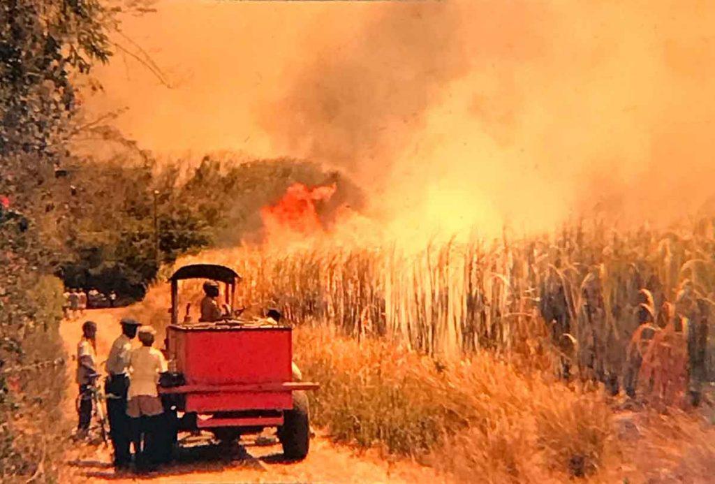 Sugar cane fire - Barbados
