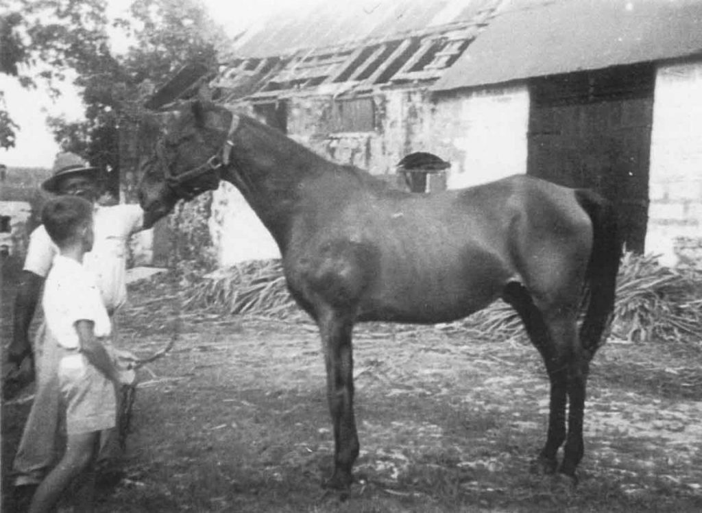 Ashbury Plantation horse Bensam